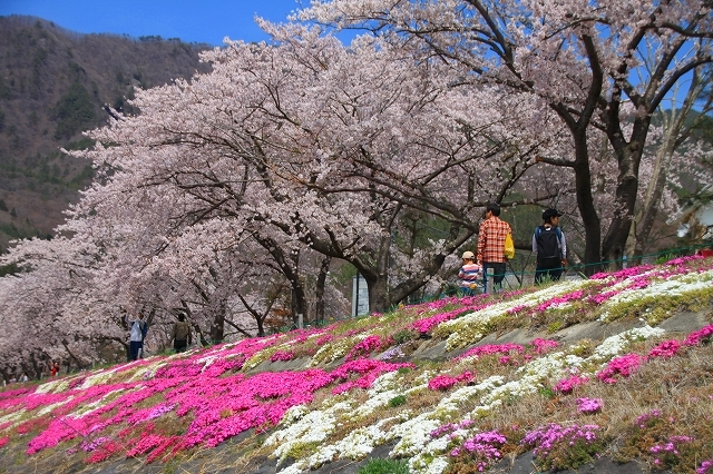 富士山と桜 河口湖畔_f0374092_23143976.jpg