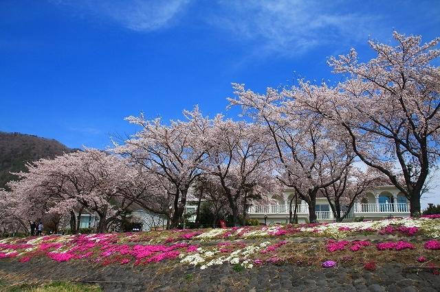 富士山と桜 河口湖畔_f0374092_23145598.jpg