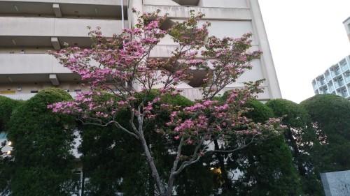 花が。_f0166694_22353390.jpg