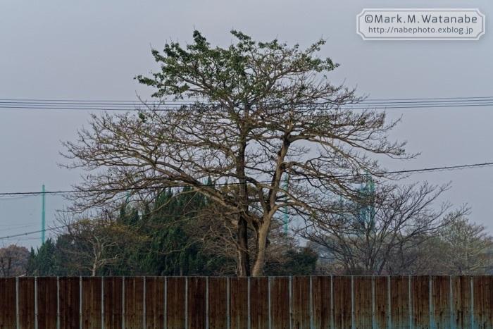 錆びた鉄の壁と樹木_e0135098_07495923.jpg