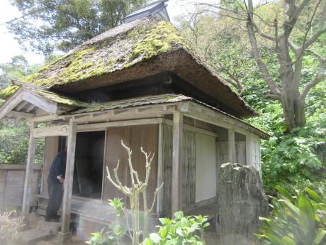 ことしのさくら・良寛記念館・摘み草 など_a0203003_16334682.jpg
