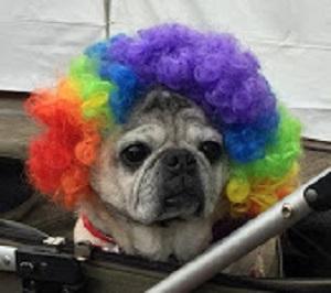 Tokyo Rainbow Pride 2019_b0114515_21091708.jpg