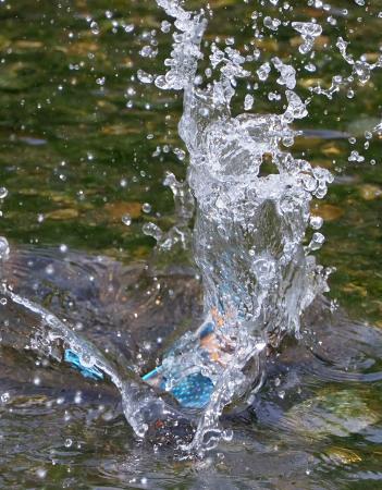 4月28日(日) カワセミのヒナが孵ったようで、10分おきくらいて゛鮎を運んでいました。_b0369117_14144704.jpg