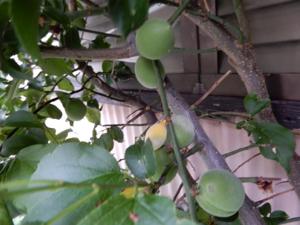 果樹エリアレポート_f0101128_13452179.jpg