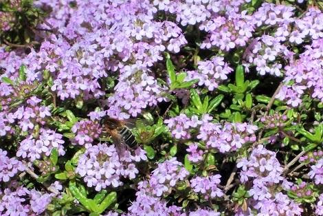 春の海_a0259130_17130339.jpg