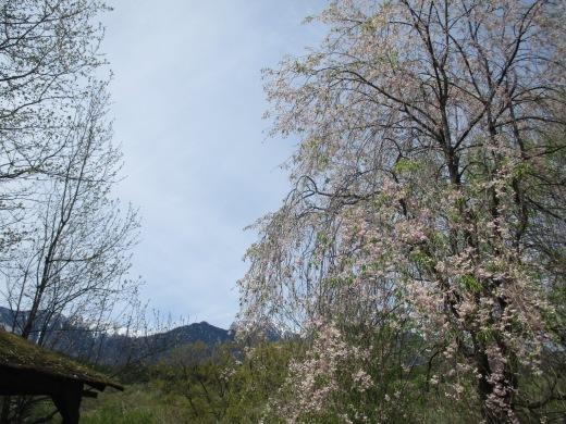 お花見バーベキュー  4月27日(土)_d0127634_16231441.jpg