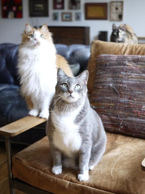 猫のお留守番 あーるくんもんてぃくんさんかちゃん編。_a0143140_22085160.jpg