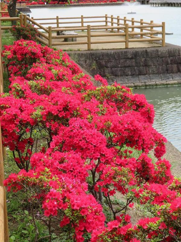 長岡京市「八条ヶ池」20190426_e0237645_12160273.jpg