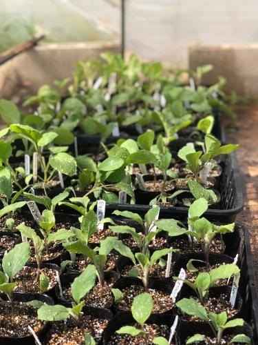 トマト定植開始します・・・_c0222448_12454226.jpg