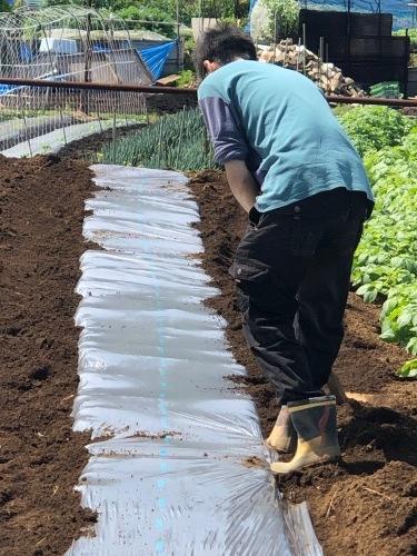 トマト定植開始します・・・_c0222448_12461879.jpg