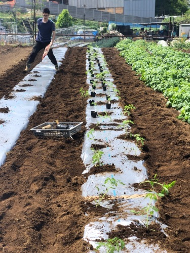 トマト定植開始します・・・_c0222448_12470966.jpg