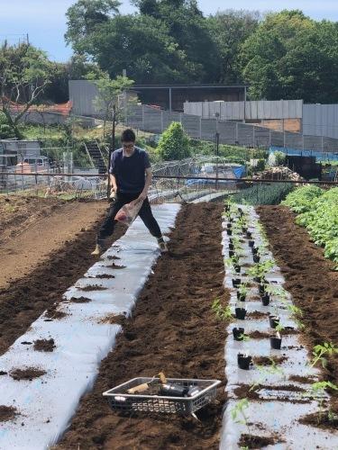 トマト定植開始します・・・_c0222448_12473963.jpg
