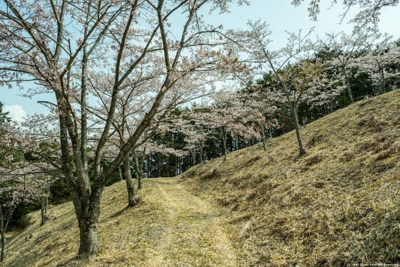 ここも宇陀の桜_c0350572_15411840.jpg