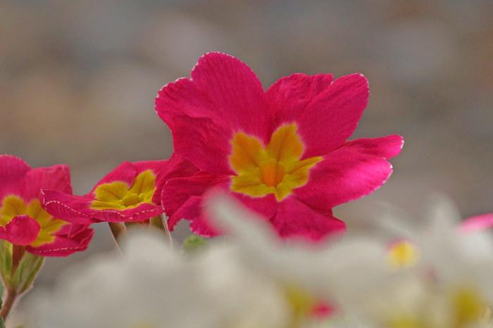 春・花_d0162994_08210169.jpg