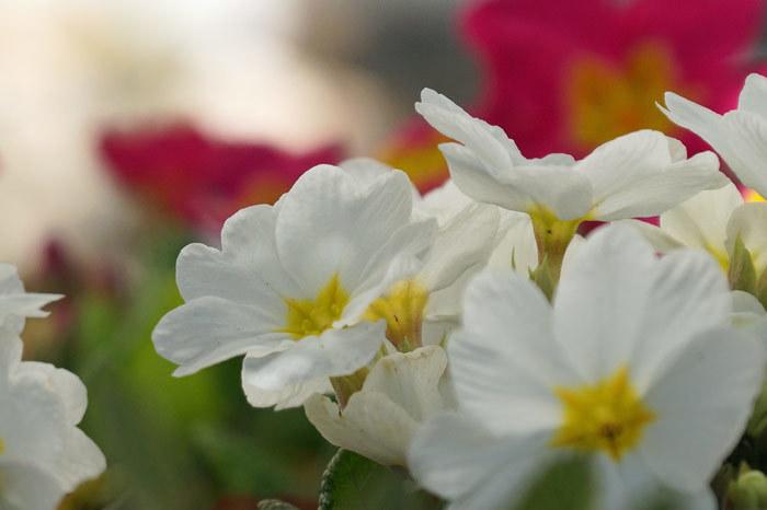 春・花_d0162994_08211294.jpg