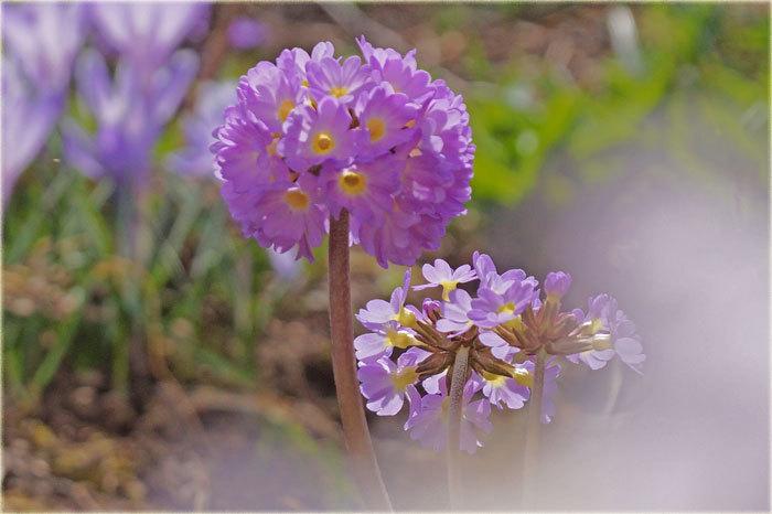 春・花_d0162994_08212672.jpg