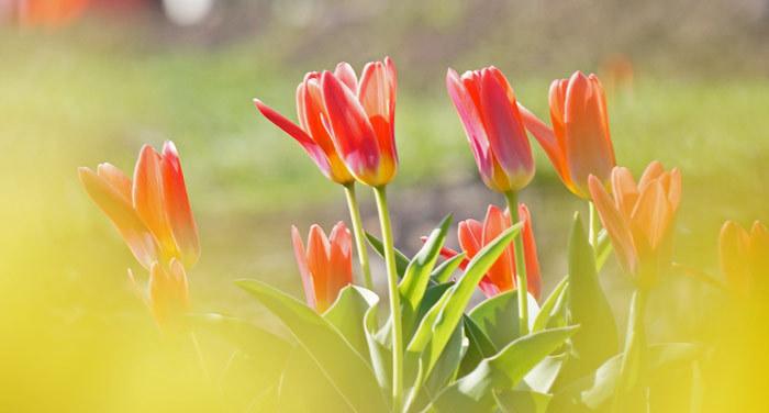 春・花_d0162994_08213887.jpg