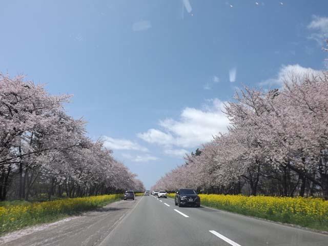 秋田県大潟村菜の花ロード_f0019498_18092645.jpg