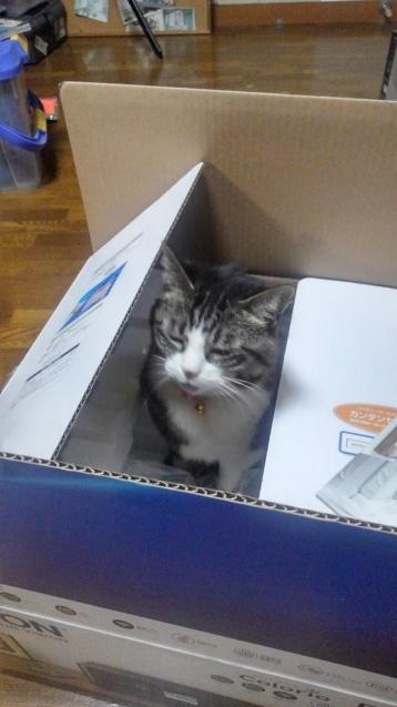 【猫】箱好き?_f0141609_23431959.jpg