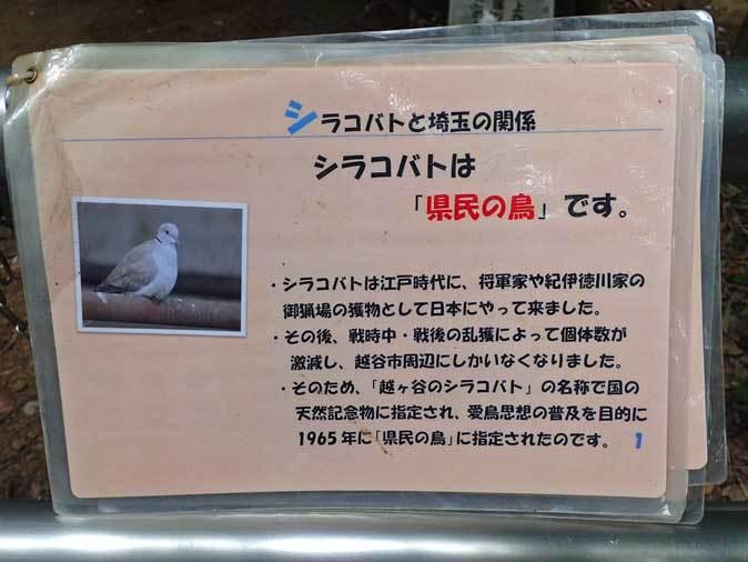 大宮公園小動物園「とりたちのらくえん」~嗚呼、シラコバト(July 2018)_b0355317_13252436.jpg