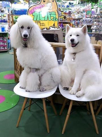 あの白い犬は_c0062832_15532969.jpg