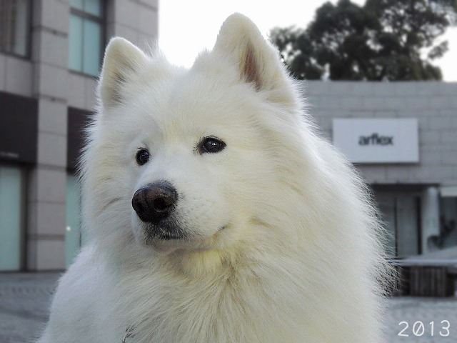 あの白い犬は_c0062832_16284046.jpg