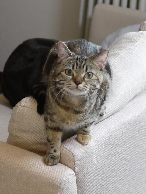 猫のお留守番 モルディブちゃん編。_a0143140_18361220.jpg