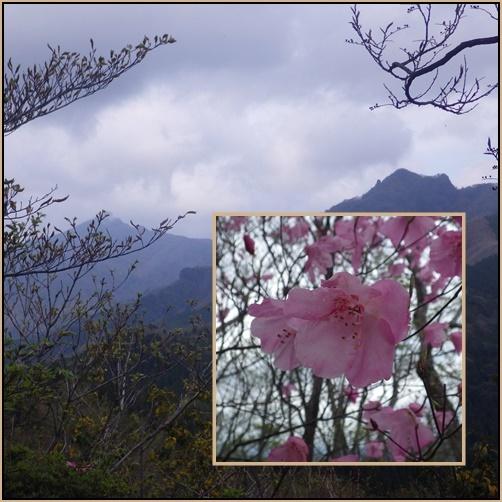 赤川浦岳へ、白のアケボノツツジを求めて_e0164643_15463992.jpg