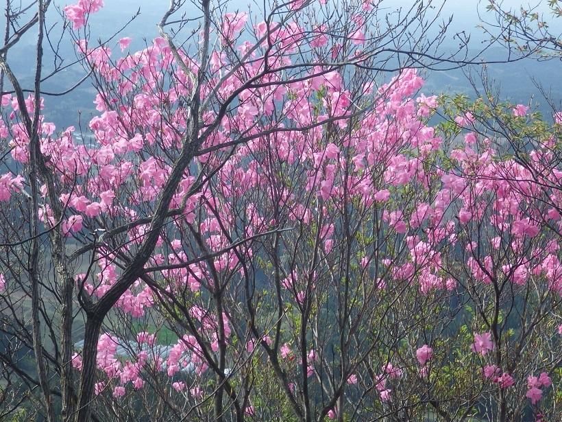 赤川浦岳へ、白のアケボノツツジを求めて_e0164643_15471129.jpg