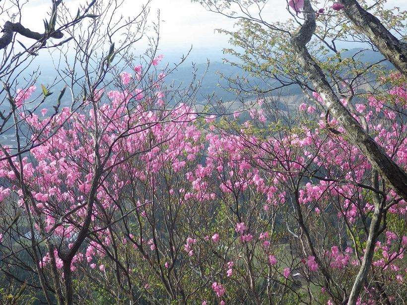 赤川浦岳へ、白のアケボノツツジを求めて_e0164643_15472688.jpg
