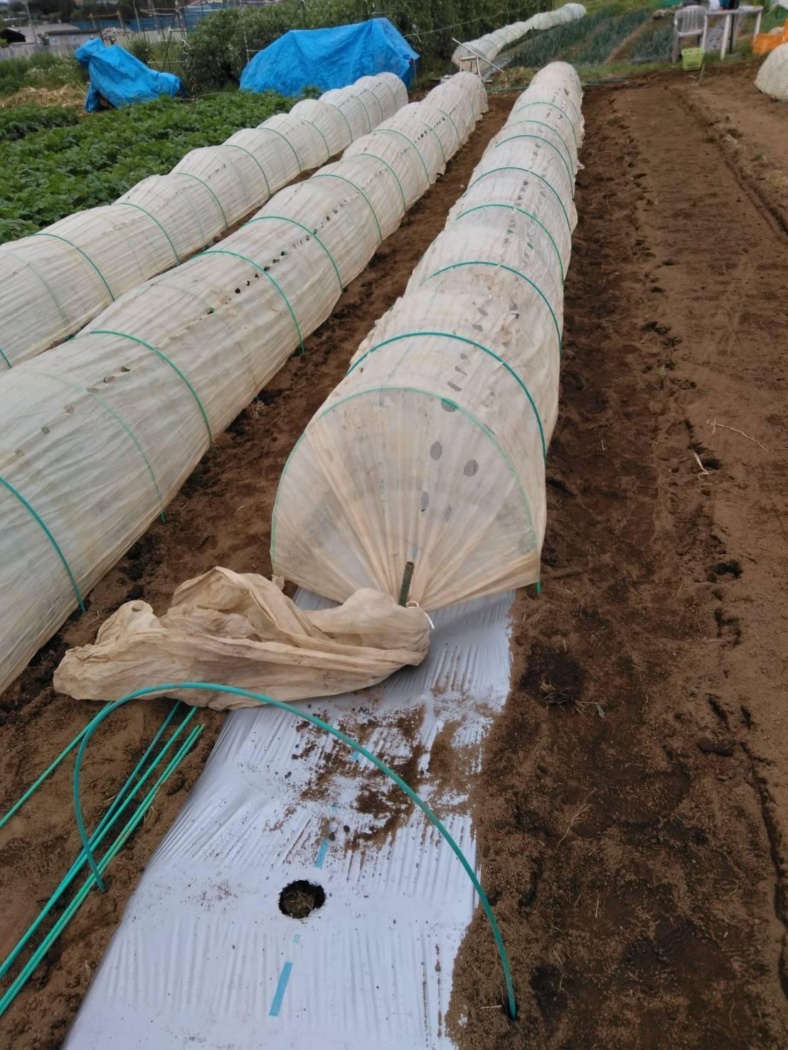 トマトの苗定植終了 明日から茄子とパプリカ・・・_c0222448_15443919.jpg