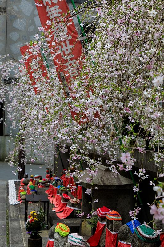 桜咲く京都2019 六角堂・御幸桜_f0155048_20563913.jpg