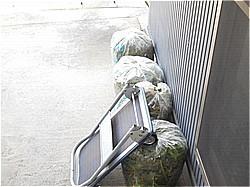 庭の大掃除_c0087349_09182308.jpg