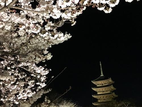 京都の旅\'19 Ⅲ 京都桜旅その1_e0326953_17371888.jpg