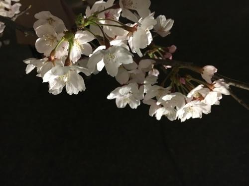 京都の旅\'19 Ⅲ 京都桜旅その1_e0326953_17394148.jpg