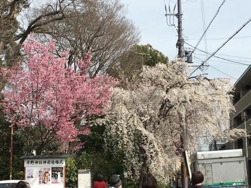 京都の旅\'19 Ⅲ 京都桜旅その1_e0326953_21570415.jpg