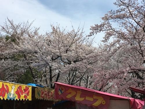 京都の旅\'19 Ⅲ 京都桜旅その1_e0326953_21571825.jpg