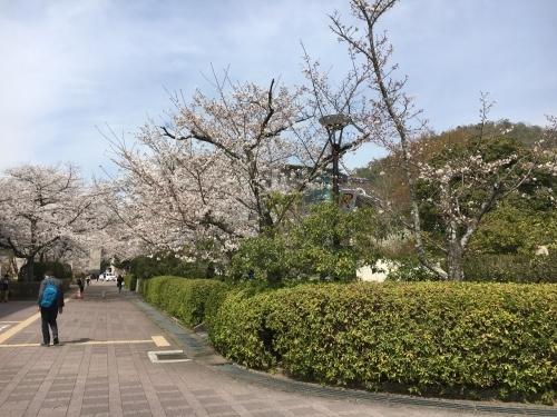 京都の旅\'19 Ⅲ 京都桜旅その1_e0326953_22074649.jpg