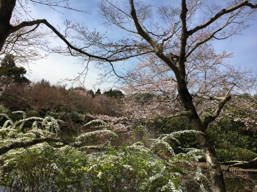 京都の旅\'19 Ⅲ 京都桜旅その1_e0326953_22174135.jpg