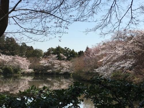 京都の旅\'19 Ⅲ 京都桜旅その1_e0326953_22215279.jpg