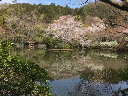 京都の旅\'19 Ⅲ 京都桜旅その1_e0326953_22223107.jpg