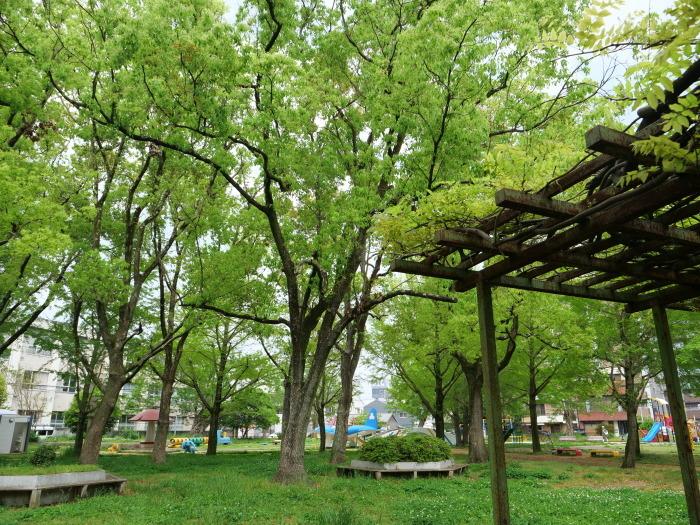 雨の日の小公園  2020-05-11 00:00   _b0093754_21052735.jpg