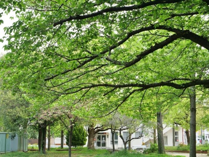 雨の日の小公園  2020-05-11 00:00   _b0093754_21063247.jpg
