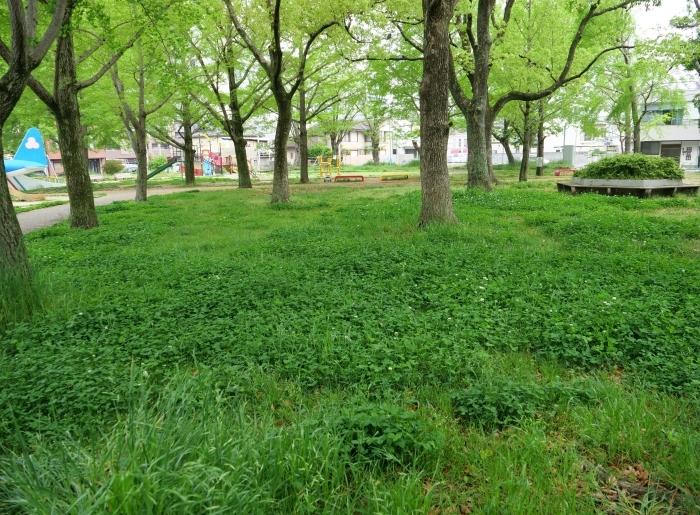雨の日の小公園  2020-05-11 00:00   _b0093754_21175564.jpg