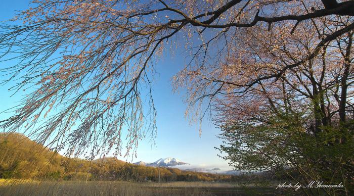 二週続けてノビタキ詣で_c0217255_13120205.jpg