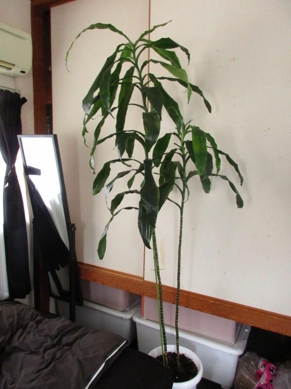 植物「決断の時」_b0362459_13383281.jpg