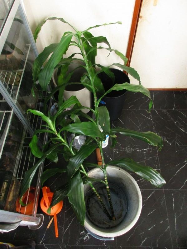 植物「決断の時」_b0362459_13452579.jpg