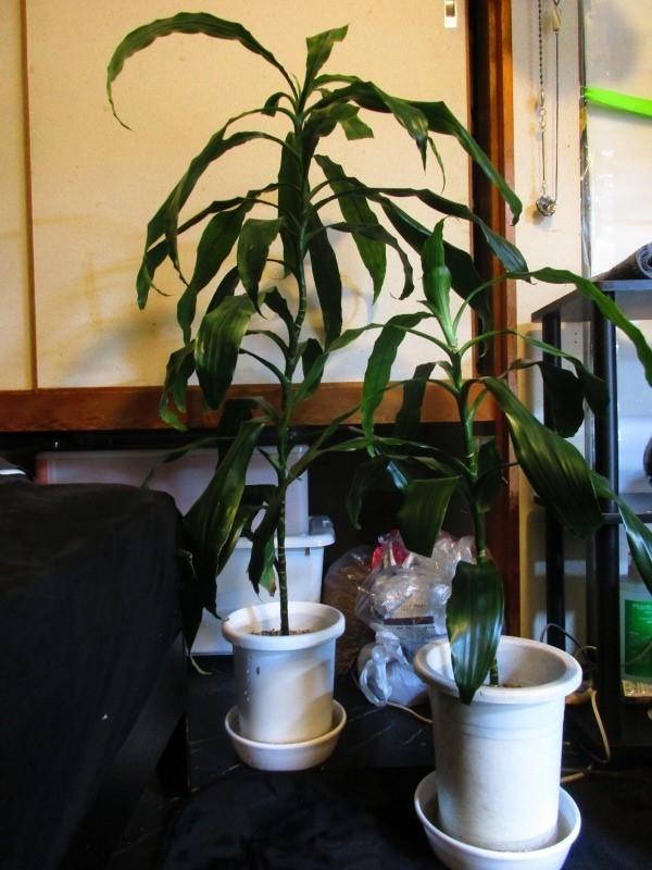 植物「挿し木完了 」_b0362459_19240980.jpg