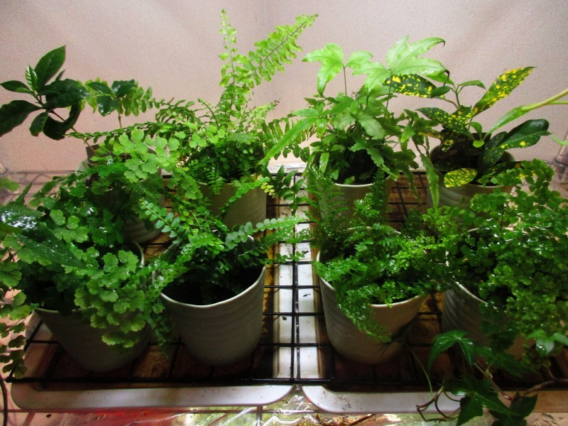 植物「挿し木完了 」_b0362459_19290641.jpg