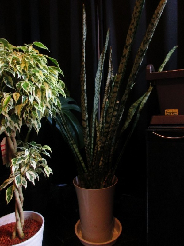 植物「挿し木完了 」_b0362459_19343085.jpg